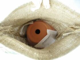Baumset Anzuchtset Saatset Rotfichte Geschenkset komplett mit Topf und Anleitung