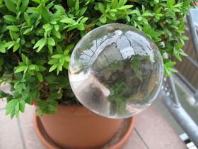 Gießfrei Bewässerungskugeln Durstkugel aus Glas 2erSet