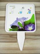 Prunkwinden / Ipomoea auf Pfanzenkarte mit Samen schöne Kletterpflanze